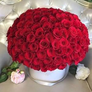 101 красная роза в коробке R884